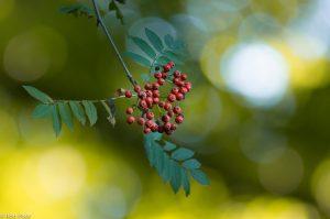 Het licht dat door de boomtoppen schijnt zorgt voor bokeh effecten in het beeld.  - Fotograaf: Ron Poot