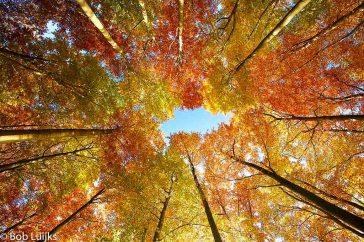 herfstsferen