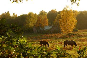 Paarden in de ochtend