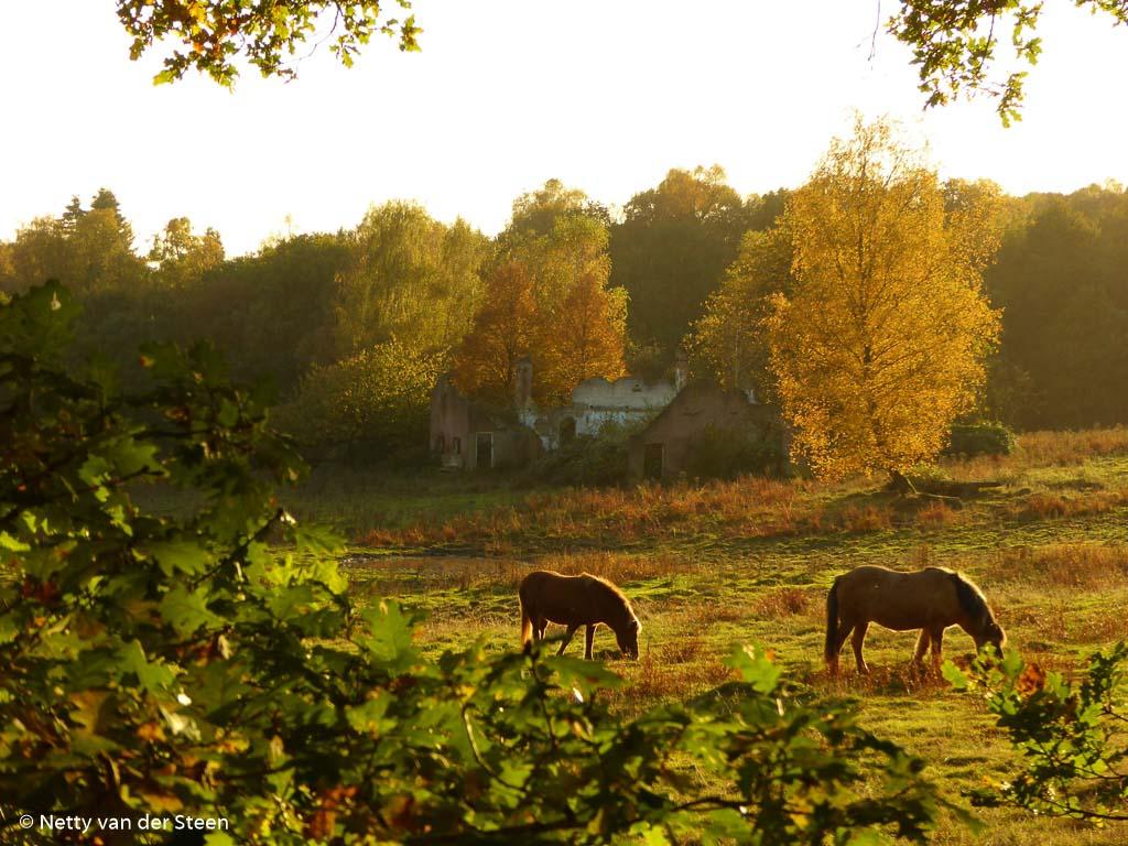 Fotobespreking thema 'zoogdieren uit de Benelux': Netty en Lennard