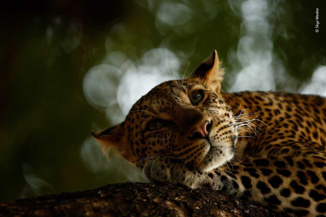 ©-Skye-Meaker-Wildlife-Photographer-of-the-Year
