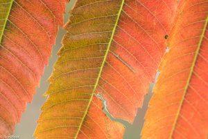 Zoek naar de afwijking, een scheurtje in het blad is hier de blikvanger. - Fotograaf: Ron Poot