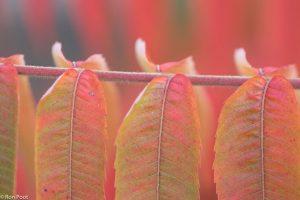 Inzoomen op kleine opvallende details, zoals de aanhechting van de bladeren. - Fotograaf: Ron Poot