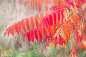 De bonte kleurenpracht van de fluweelboom. - Fotograaf: Ron Poot