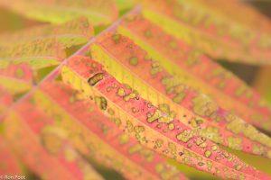 Let op de details: de aangetaste bladeren tonen een interessant patroon. - Fotograaf: Ron Poot
