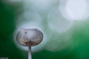 Het licht in de boomkruinen zorgt voor een mooi bokeh in de achtergrond.  - Fotograaf: Ron Poot