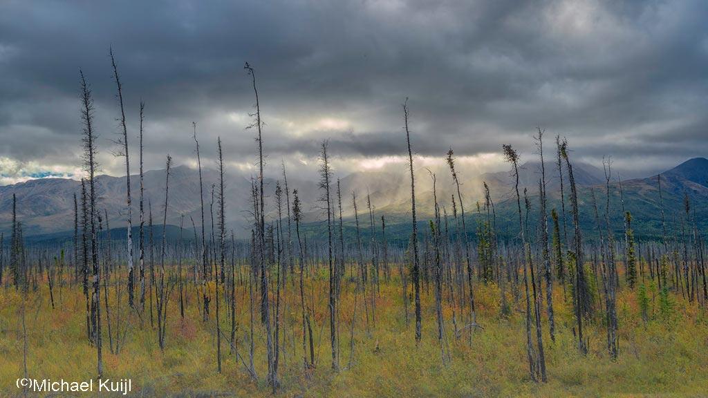 Verbrand bos
