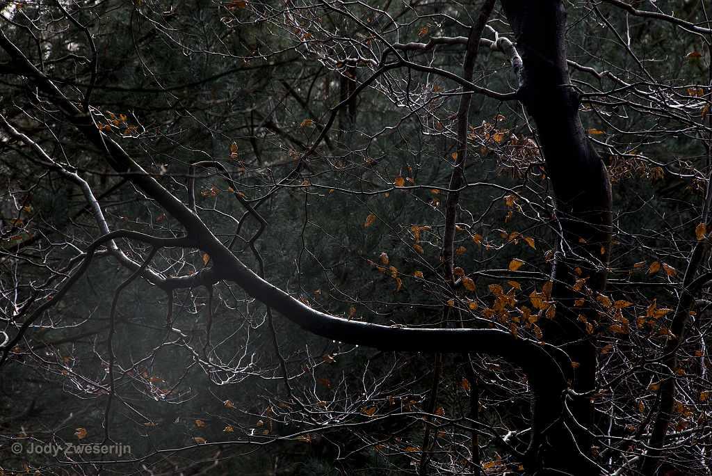 Fotograferen in het herfstbos