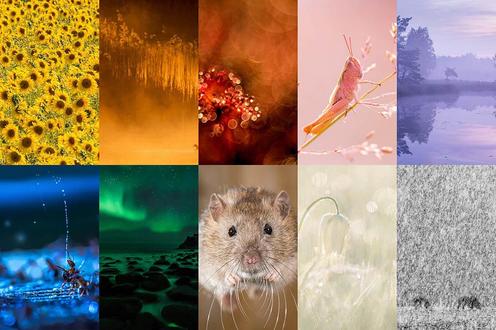 Kleuren in de natuurfotografie