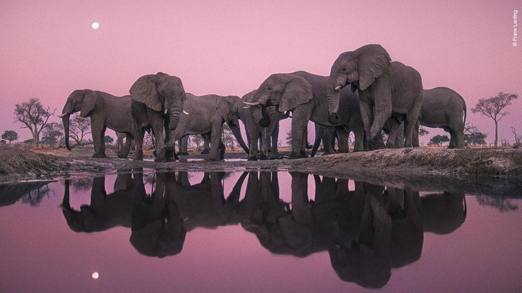 Winner 2018, Wildlife Photographer of the Year Lifetime Achievement Award, Frans Lanting, The Netherlands