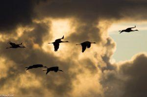 Een wolkenlucht maakt het plaatje levendiger. - Fotograaf: Ron Poot