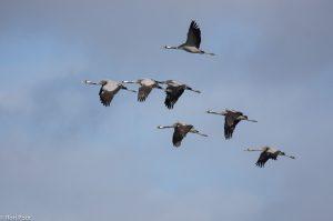 Een groepje op weg naar het maisland. - Fotograaf: Ron Poot