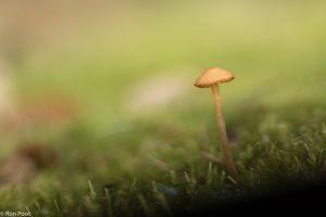 Geef een kleine paddenstoel rustig de ruimte om zijn nietigheid te accentueren. - Fotograaf: Ron Poot