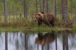 Een locatie langs een meer is goed voor een spiegeling. - Fotograaf: Andius Teijgeler