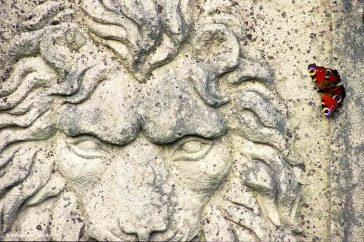 Leeuw en dagpauwoog