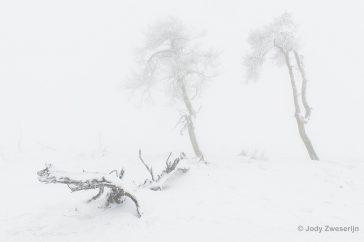 Witte sneeuw