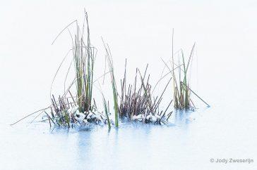 Ingevroren gras