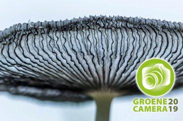 Groene Camera 2019
