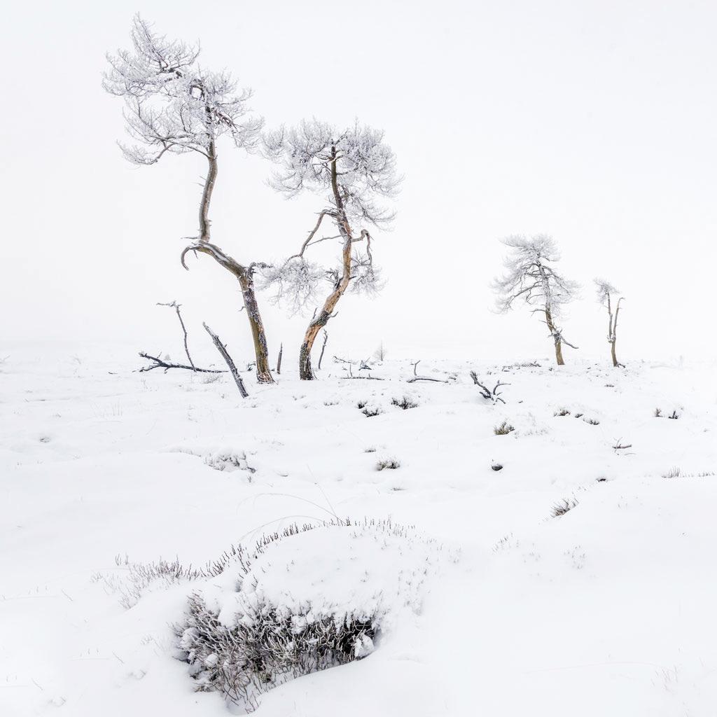 Hoge Venen in een pak sneeuw