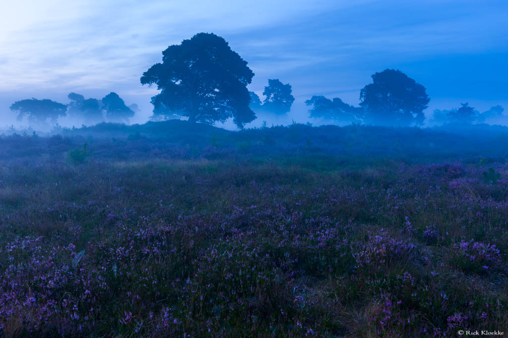 Mooie laag mist