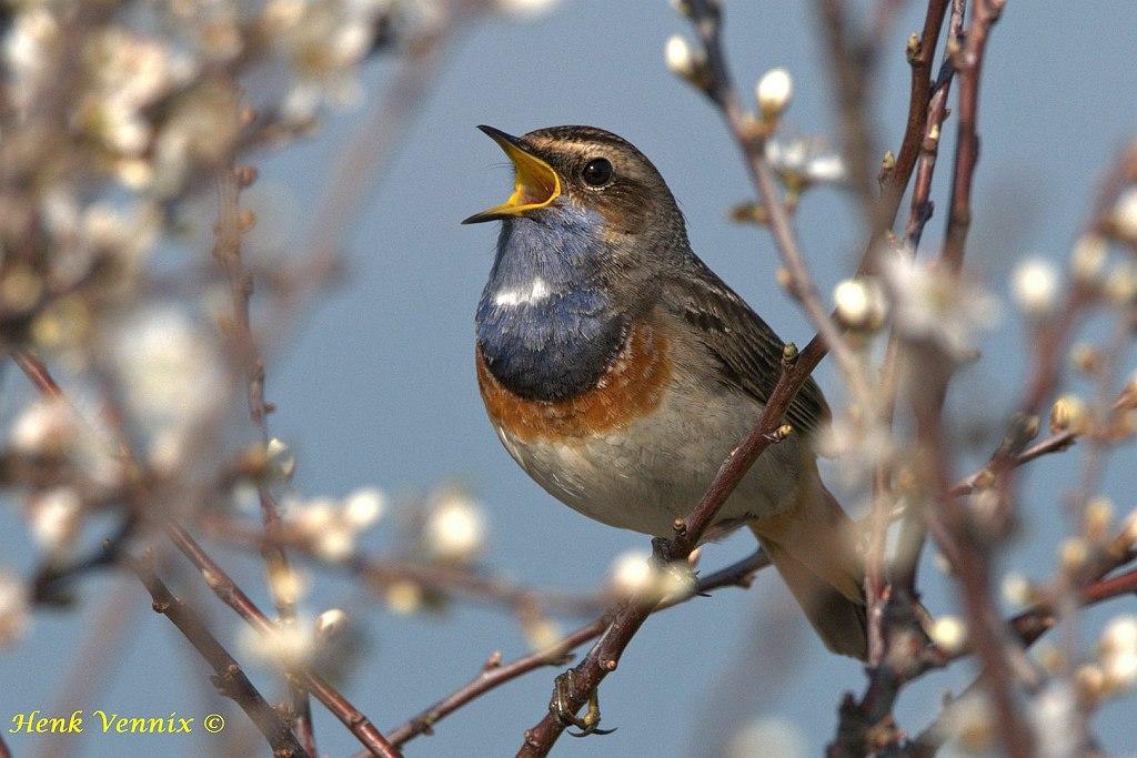 Natuurfotografenvereniging Natuur in Beeld