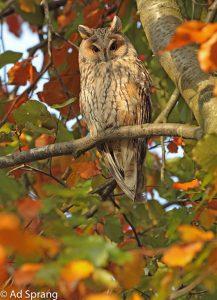 In de herfst is het een buitenkansje als je gebruik kunt maken van fraaie herfstkleuren. - Fotograaf: Ad Sprang