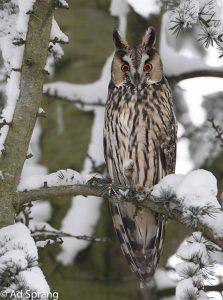 In winterse omgeving.  - Fotograaf: Ad Sprang