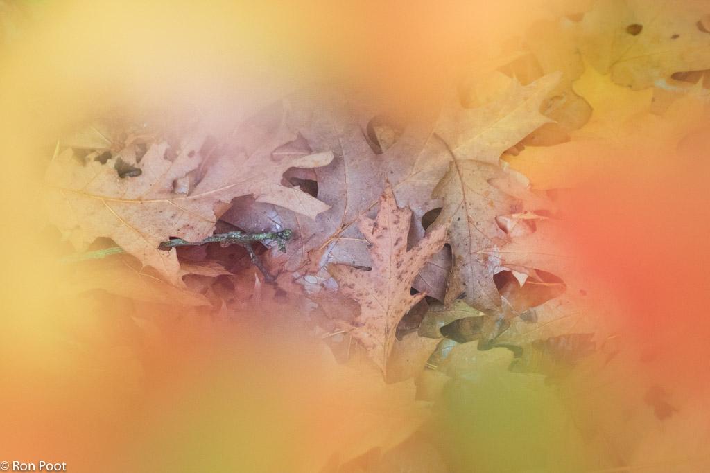 Compositie: vlekken en vlakken