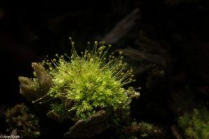Maak gebruik van een straaltje zonlicht dat net op jouw polletje mos valt om hem goed uit te lichten.  - Fotograaf: Ron Poot