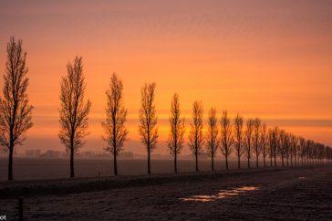 Bomenrij bij zonsopkomst