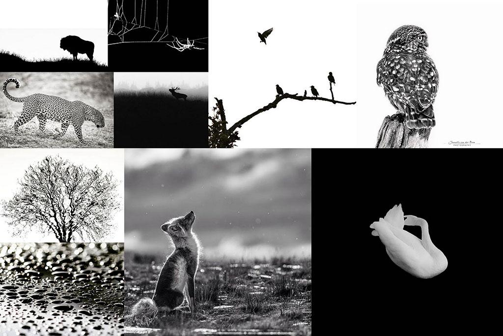 zwartwit natuurfotografie