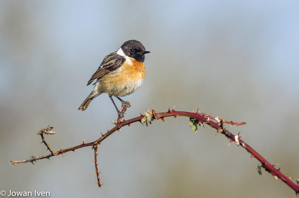 Gebieden fotograferen Natuurfotografie.nl:De Groote Peel