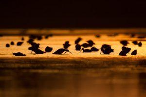 Maak gebruik van tegenlicht bij zonsopkomst of -ondergang voor een sfeervol beeld.  - Fotograaf: Andius Teijgeler