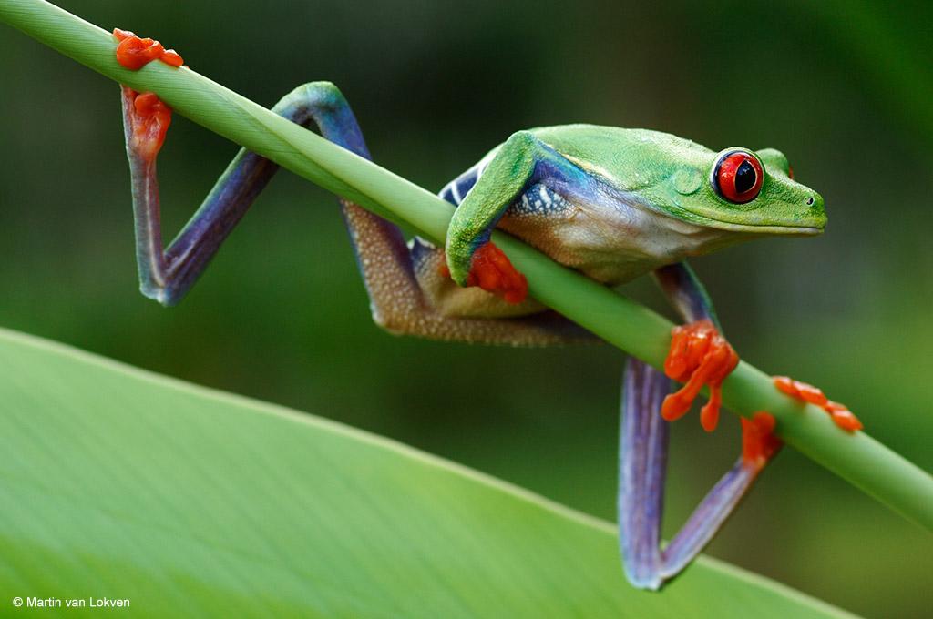 (Wilde) kleuren van Costa Rica