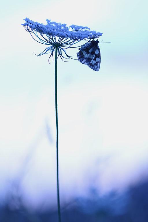 Bloem & vlinder
