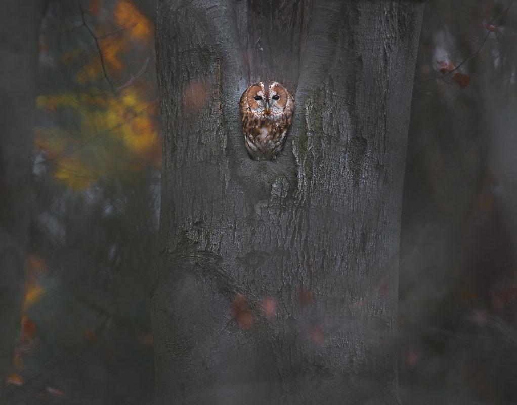 Bosuil in een mysterieuze herfstsetting