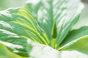 De zon op een plant zorgt voor allerlei boeiende contrasten. - Fotograaf: Ron Poot