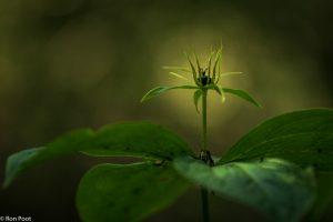 Gebruik natuurlijke lichtvlekken in de achtergrond om een bloem te markeren. - Fotograaf: Ron Poot