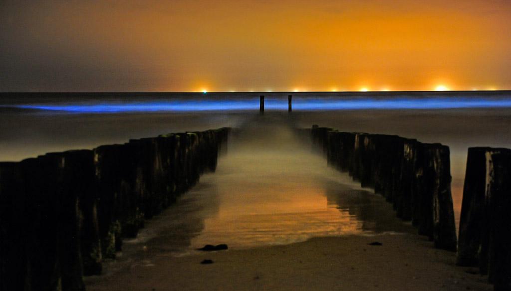 Zeevonk, de lichtende zee