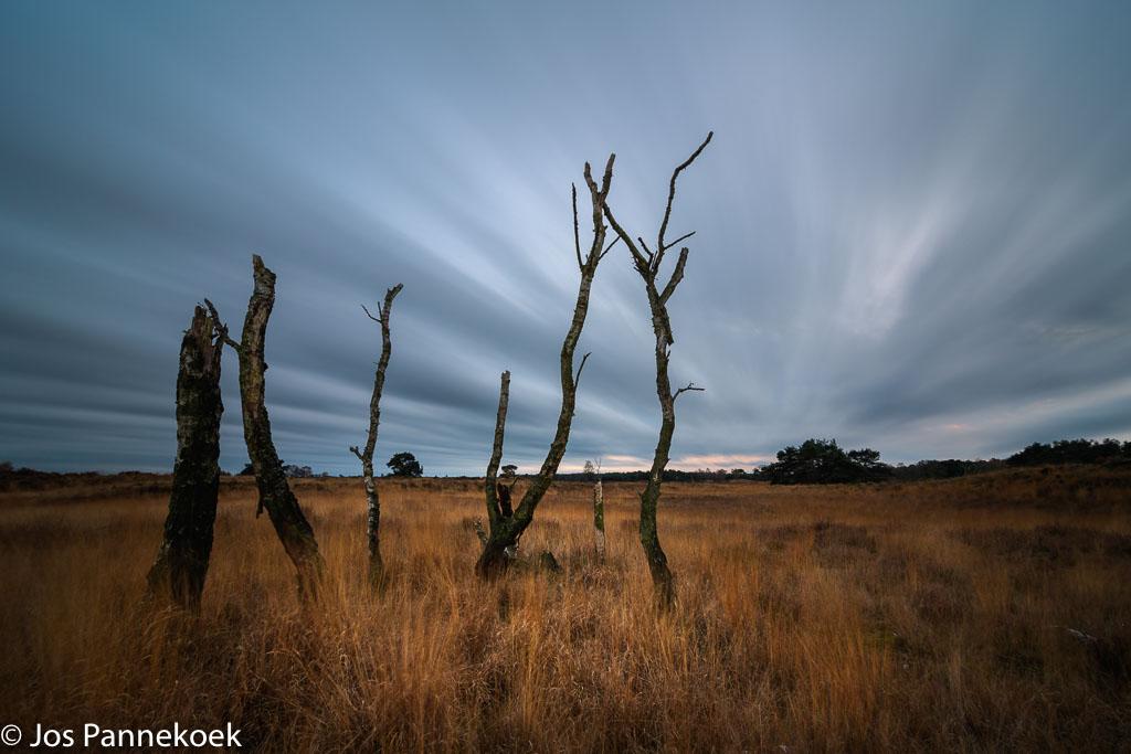 Gebieden fotograferen Natuurfotografie.nl:Grenspark Kalmthoutse Heide