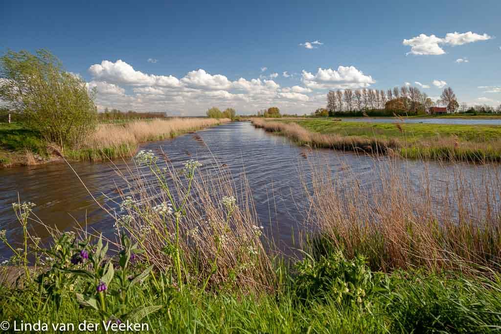Gebieden fotograferen Natuurfotografie.nl:Sophiapolder