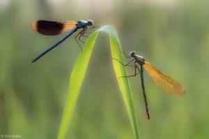 Man en vrouw. - Fotograaf: Chris Ruijter