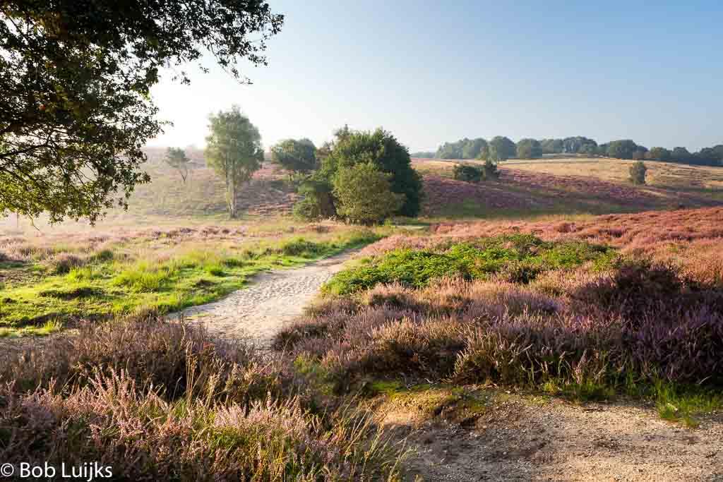 Gebieden fotograferen Natuurfotografie.nl:Mookerheide