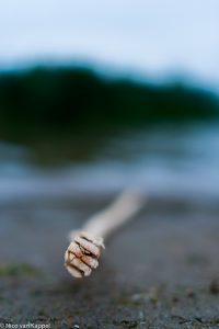 - Fotograaf: Nico van Kappel