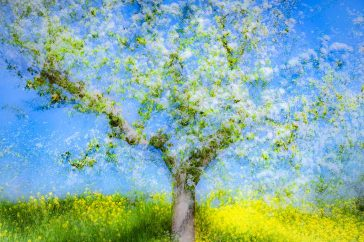De amandelbloesem van Vincent van Gogh