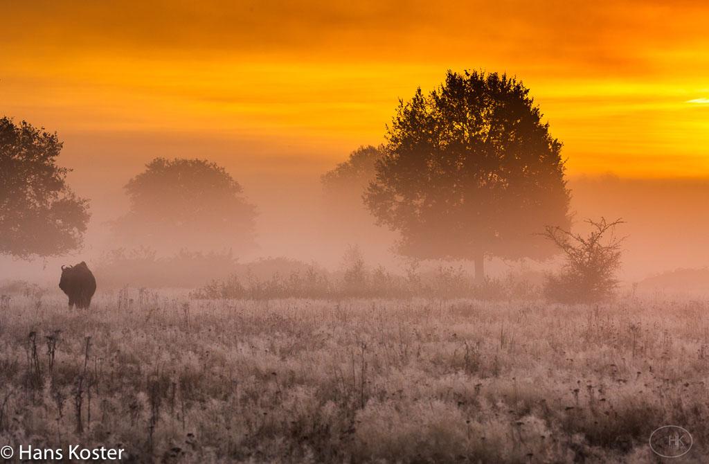 Gebieden fotograferen Natuurfotografie.nl:De Maashorst en omstreken