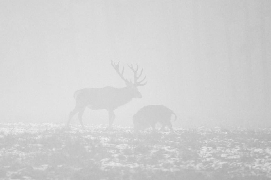 Hert en zwijn