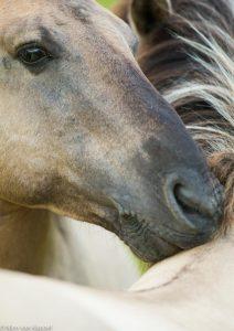 Intimiteit. - Fotograaf: Nico van Kappel