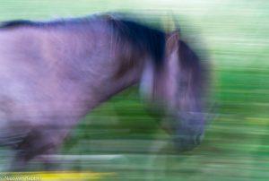 De kracht van beweging. - Fotograaf: Nico van Kappel