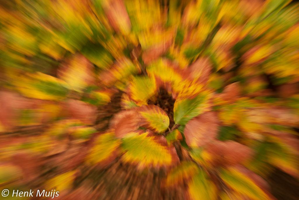 Abstracte natuurfotografie, deel 2: dynamiek en beweging